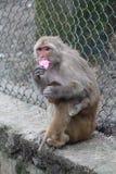 与她的孩子的猴子 免版税库存图片