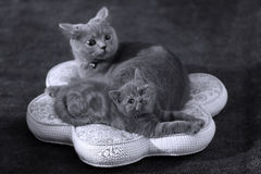 与她的母亲的小猫枕头的 免版税库存图片