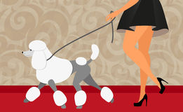 与她的长卷毛狗的端庄的妇女步行 库存图片