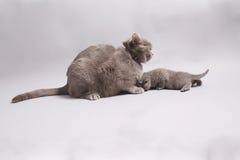 与她的婴孩的母亲猫 库存照片