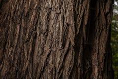 与好的吠声的树 免版税图库摄影