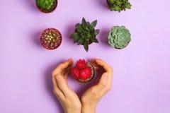 与妇女的Flatlay在开花的仙人掌和各种各样的多汁植物附近在紫色背景 免版税库存照片