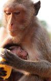 与婴孩的猴子 免版税库存照片