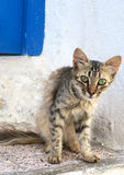 与嫉妒的好奇猫在突尼斯街道上 库存照片