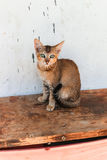 与嫉妒的小的不丹离群猫坐一个长木凳在一个村庄在不丹 库存照片