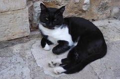与嫉妒的黑白的猫 免版税库存照片