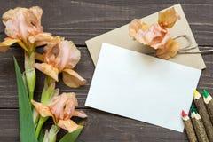与嫩虹膜的空白的白色贺卡开花花束和信封 库存照片
