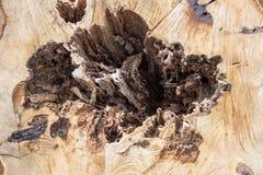 与孔的树干 库存照片