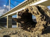 与孔的老腐烂的木树桩在水带来的沙滩岸在河选择聚焦低观点正方形附近 免版税库存照片