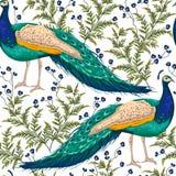 与孔雀、花和叶子的无缝的样式 向量例证