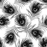与孔雀的无缝的样式用羽毛装饰传染媒介例证 库存照片