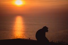 与孤独的猴子的日落 免版税库存照片