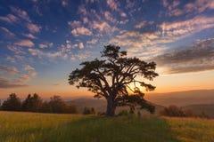 与孤立树的美好的山风景在日出 库存照片
