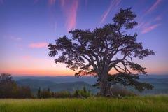 与孤立树的美好的山风景在黎明 免版税库存图片