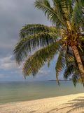 与孤立椰子的美好的风景 免版税库存图片