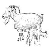 与孩子的山羊 免版税库存照片