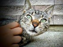 与孩子的猫 免版税库存图片