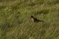 与它的一只猎兔犬祈祷 免版税库存图片