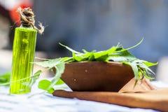 与它的叶子的印度的Azadirachta,在一个瓶的Neem和油在黏土为护肤滚保龄球 库存照片
