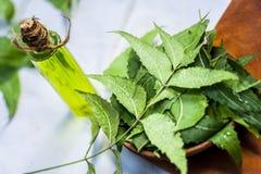与它的叶子的印度的Azadirachta,在一个瓶的Neem和油在黏土为护肤滚保龄球 免版税库存图片