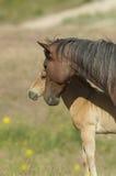 与它的小马的嫩片刻 免版税库存图片