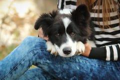 与它的所有者的愉快的小狗 免版税库存照片