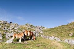 与它的母亲的一匹马驹回声的谷的 免版税库存照片
