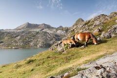 与它的母亲的一匹马驹回声的谷的 免版税库存图片
