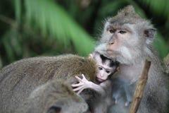 与它的母亲的小猴子 免版税库存图片