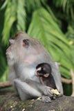 与它的母亲的小猴子 库存照片