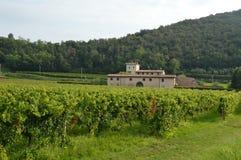 与它的葡萄园的一个古老农厂庄园在乡下  免版税库存照片