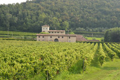 与它的葡萄园的一个古老农厂庄园在乡下  免版税图库摄影