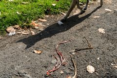 与它的阴影的一条狗在绿色草坪旁边穿过一条热的柏油路 库存照片