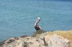 与它的额嘴的可爱的鹈鹕开放在海岸 图库摄影
