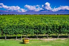 与安第斯山脉的风景风景有雪和葡萄园的 免版税库存照片