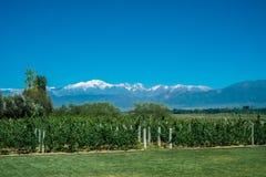 与安第斯山脉的风景风景有雪和葡萄园的 免版税库存图片
