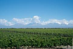 与安第斯山脉的风景风景有雪和葡萄园的 库存照片