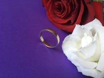 与定婚戒指的红色和白色玫瑰在紫色背景 免版税图库摄影