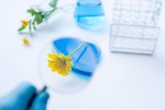 与实验室玻璃器皿的花与蓝色液体 免版税库存图片