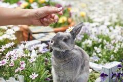 与宠物的生活 免版税库存照片