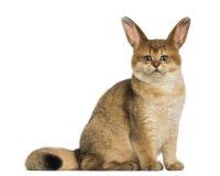 与室内天线坐的猫 免版税库存图片