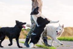 与室外三条的狗的人戏剧 免版税库存照片