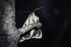 与室外五颜六色的橙色翼的特写镜头的飞蛾 一个爬行的昆虫特写镜头的画象在一个树枝的在晚上 库存照片