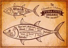 与宰割的金枪鱼一张详细绘图的海报  向量例证