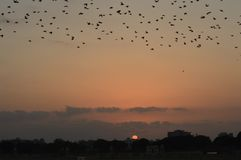 与家庭去的鸟的日落 古杰拉特 库存图片