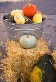 与容器的巨大的金瓜更小的南瓜 免版税库存照片