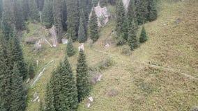 与寄生虫的射击 在森林的飞行雾的 沿道路的人步行 高涨山 股票录像