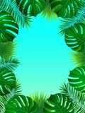 与密林植物、棕榈叶、monstera和地方的异乎寻常的热带框架您的文本的 背景蓝色云彩调遣草绿色本质天空空白小束 向量 库存例证