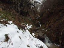 与密集的植被的小河 免版税库存图片