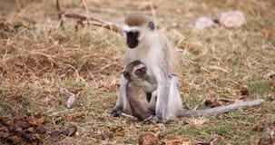 与小一个的猴子,坐徒步旅行队 免版税库存照片